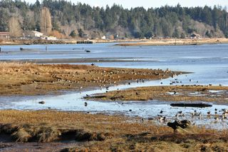 Walking the Courtenay River Estuary Trails