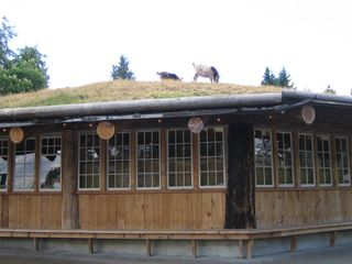"They're almost baaack: ""The Goats on the Roof"" at Coombs"