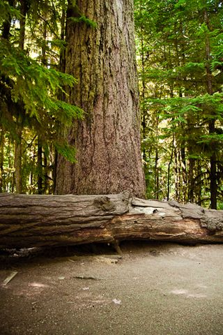 Cathedral Grove Parksville