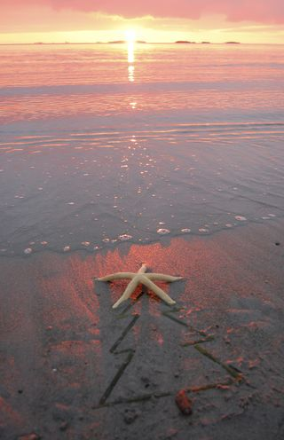 Beach tree star